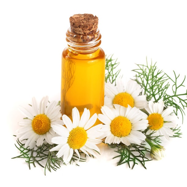 bottle with essential oil and fresh chamomile flowers isolated on white background