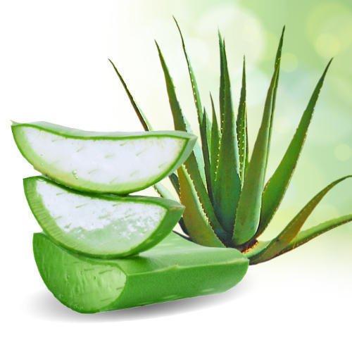 aloe-vera-leaves-500x500-500x500